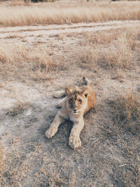 Afryka – odkryj nieznane
